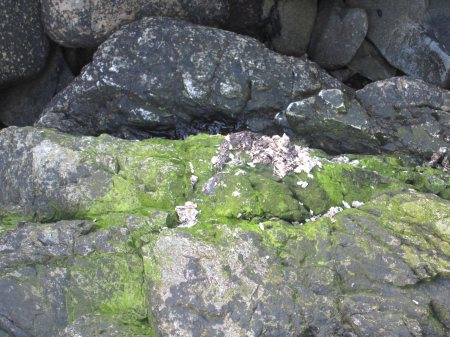 Otter Spraint Site