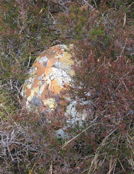 Lichened rock