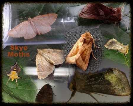 Skye Moths