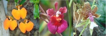 orchids LR