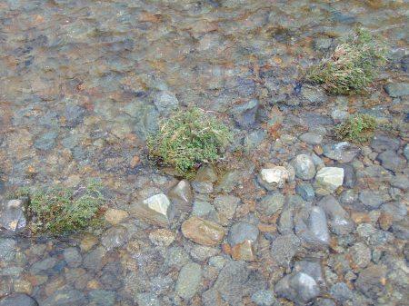 Rosa spin in river