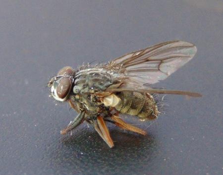fly 20170519 (1)