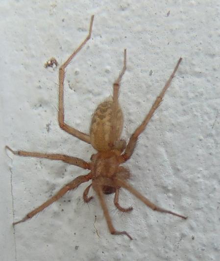 Spider 180407