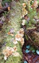 Kinloch fungus 1