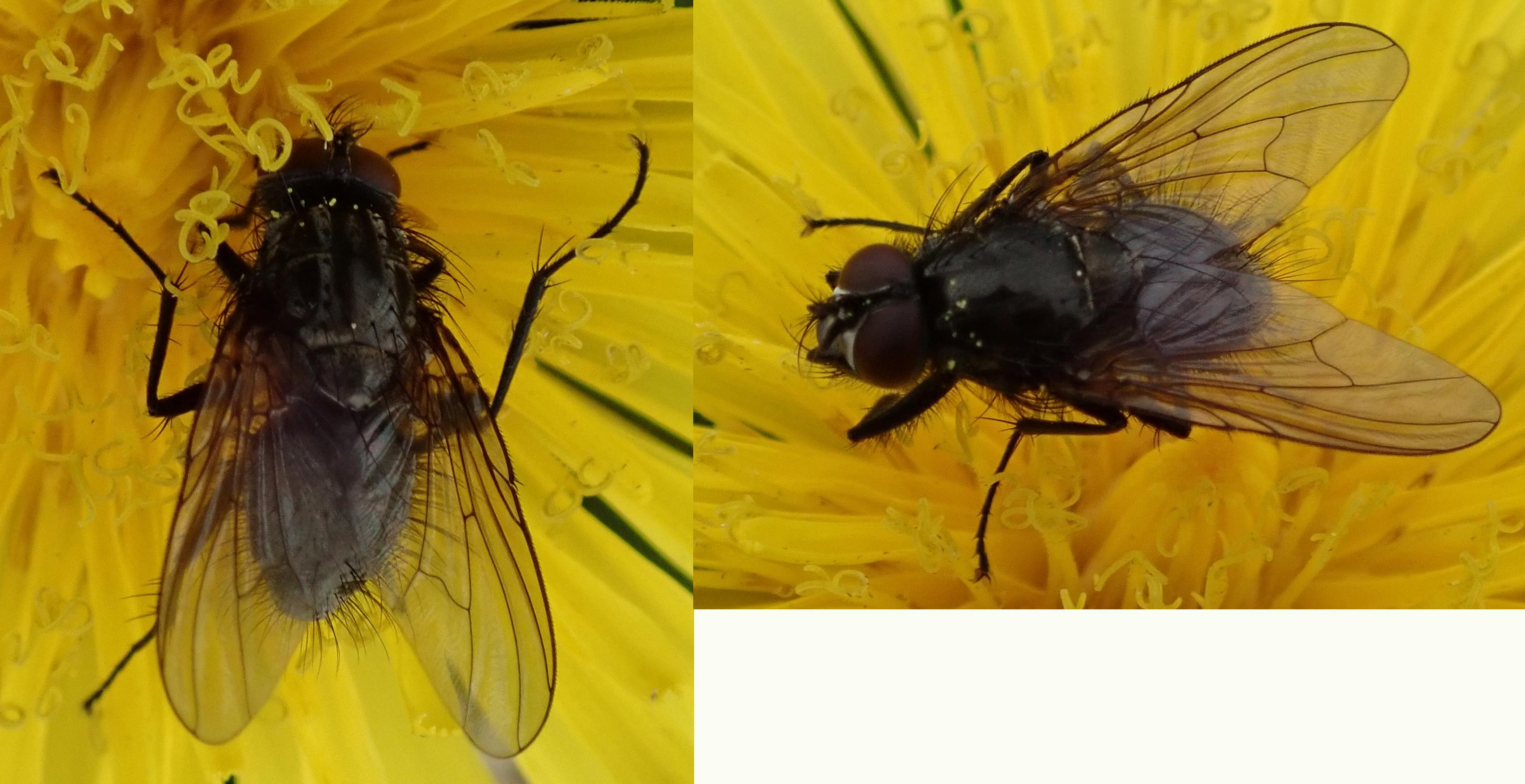 Fly on Griana-sgeir