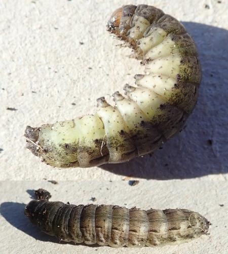 Caterpillar 200320